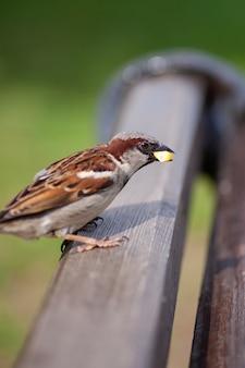 Help mee aan het overleven van vogels in de stad die in de zomer een mus met maïs voeren in het park
