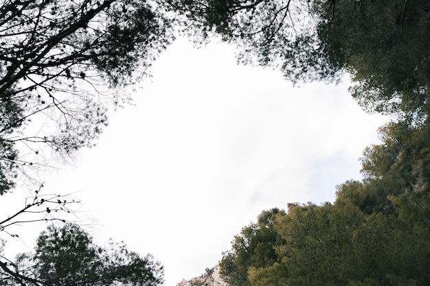 Hemel die door de groene bomenbovenkant wordt gezien in bos