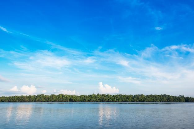 Hemel en mangrovebos bij kust