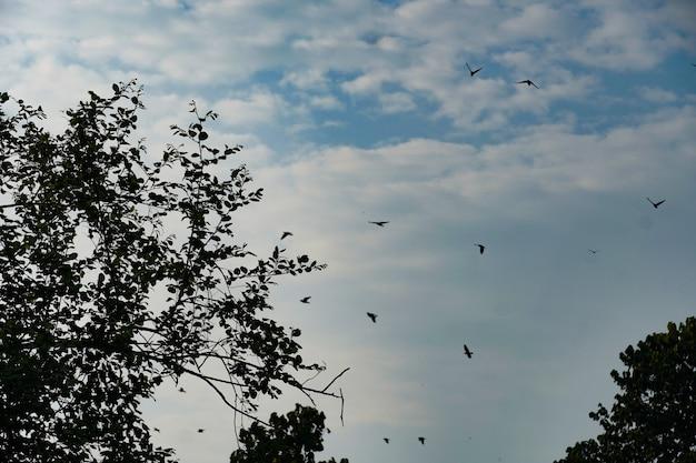 Hemel met vogels achtergrond hd