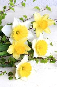 Herbarium lente bloemen narcissen berk takken witte achtergrond