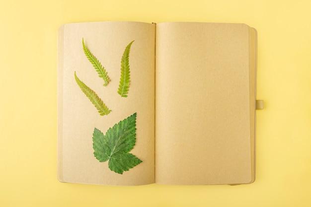 Herbarium van diverse geperste gedroogde planten op vellen vintage notebook, kruidkundige. botanische set van wilde bloemen, kruiden. platliggende herfstcompositie, kopieer ruimte voor tekst