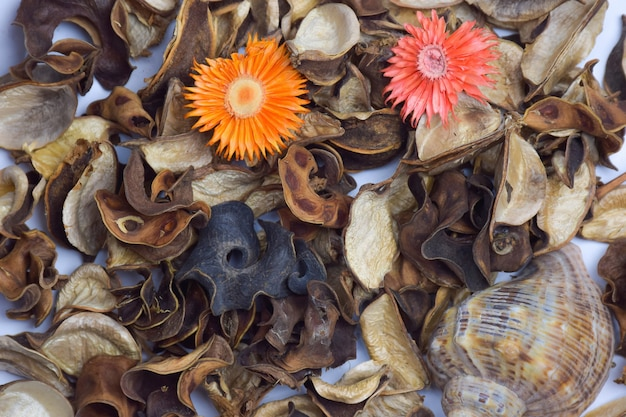 Herbarium van gedroogde bladeren, bloemen en fruit voor het hele frame