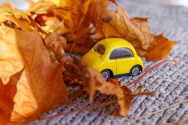 Herfst achtergrond gele speelgoedauto en gedroogde oranje herfst esdoorn bladeren op grijze gebreide trui dank...
