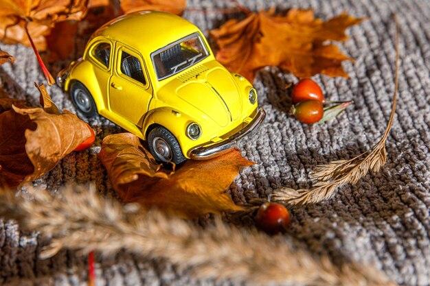 Herfst achtergrond. gele speelgoedauto en gedroogde oranje herfst esdoorn bladeren op grijze gebreide trui. thanksgiving banner kopie ruimte. hygge mood koud weer leveringsconcept. hallo herfstreizen.