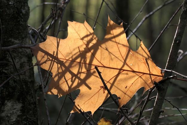 Herfst achtergrond met bladeren gevlochten in de takken van het bos.
