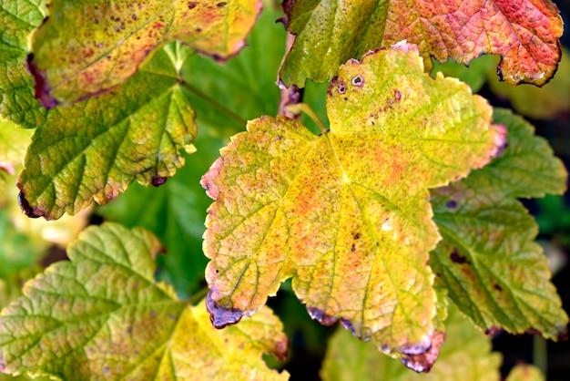 Herfst achtergrond met kleurrijke bladeren.