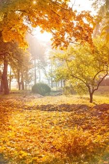 Herfst achtergrond van park