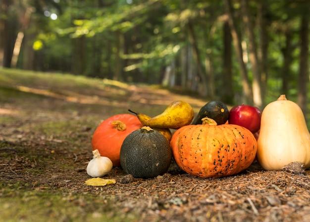 Herfst arrangement met verschillende gekleurde pompoenen