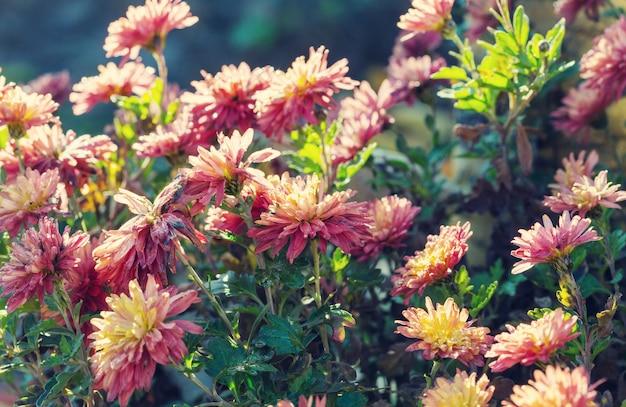 Herfst bevroren bloemen