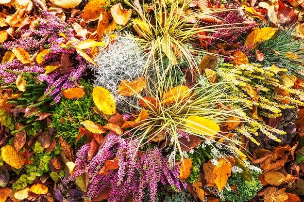 Herfst bloemen. bloembed met roze heide, gras en bladeren. bloemen achtergrond. grafdecoratie