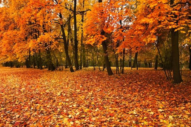Herfst bomen in park