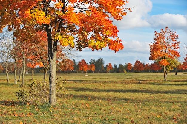 Herfst bomen met gouden bladeren in kleurrijk park, blauwe lucht met witte wolken
