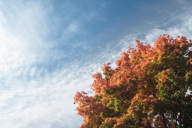 Herfst boom tegen een blauwe hemel met witte wolken.