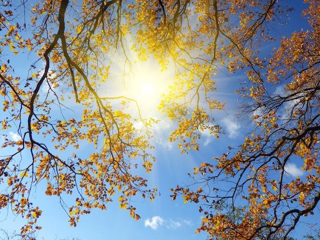 Herfst bos achtergrond in een zonnige dag