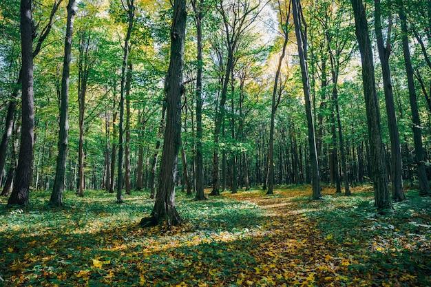 Herfst bos bomen met zonlicht