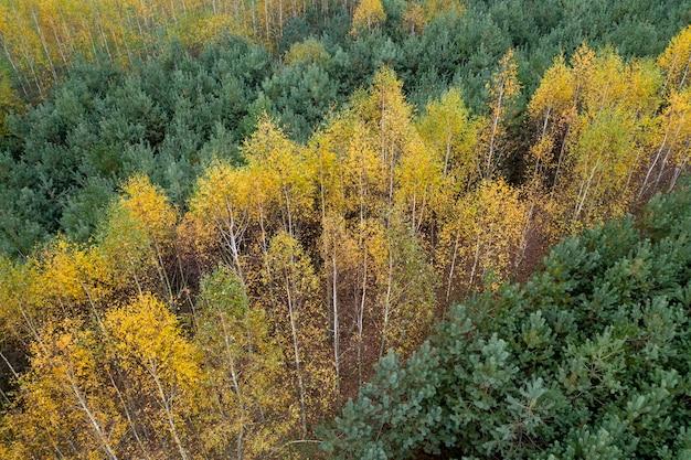 Herfst bos bovenaanzicht van een drone.