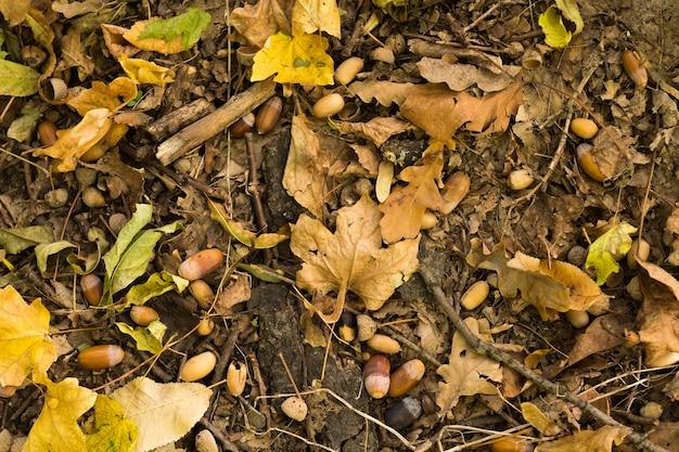 Herfst bos. bovenaanzicht van vervaagde gevallen bladeren, bruine eikels en eiken takken op de grond.