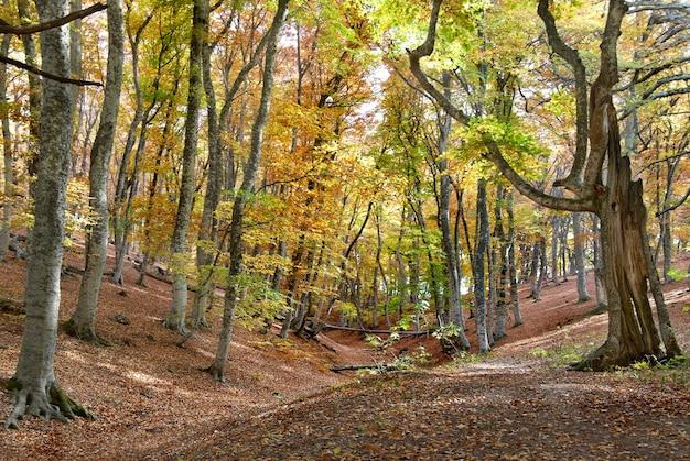 Herfst bos in de warme zonnige dag