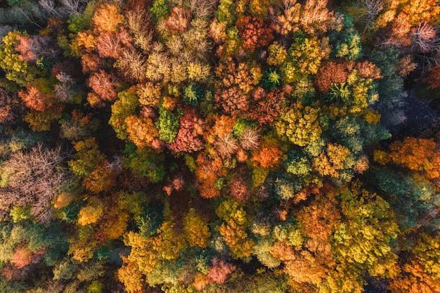 Herfst bos luchtfoto drone weergave bomen met kleurrijke oranjerode gele en groene bladeren