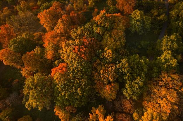 Herfst bos luchtfoto drone weergave. kleurrijke herfst tafel