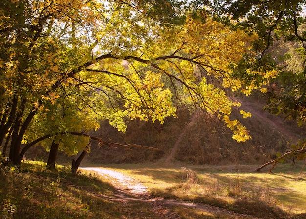 Herfst bos rood gebladerte karmozijnrode bladeren pad in het parklandschap