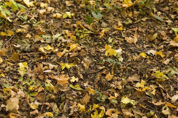 Herfst bos. vervaagde gevallen bladeren en bruine eikels op de grond.
