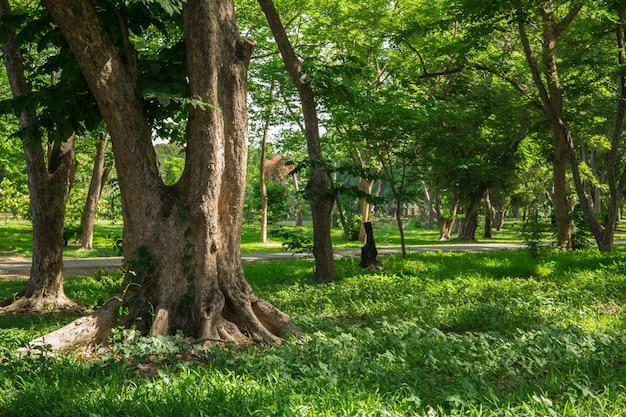 Herfst bosbomen. natuur groen hout zonlicht schaduw achtergronden.