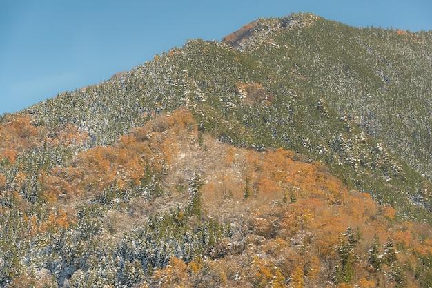Herfst boslandschap