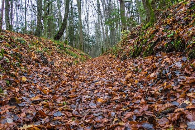 Herfst bospad scène deep forest wandelpad