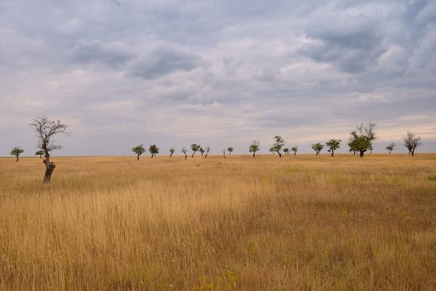 Herfst buitenfoto van met gras begroeide vlakte met verschillende bomen op de achtergrond. bewolkte hemel over zomerweide vóór regen. milieu, wilde natuur, landschappen, platteland, seizoen en weerconcept