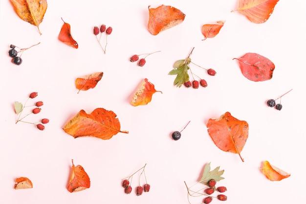 Herfst compositie gemaakt van herfst droge veelkleurige bladeren en bessen van appelbes, meidoorn op warme roze achtergrond. herfst, herfstconcept. platliggend, bovenaanzicht, kopieerruimte