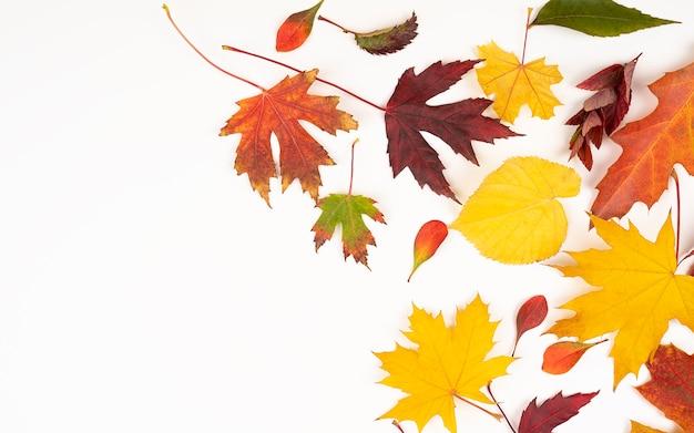 Herfst compositie. patroon gemaakt van herfstbladeren. plat lag, bovenaanzicht, kopieer ruimte. herfst concept