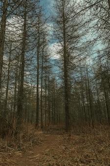 Herfst dennenbos in de mist