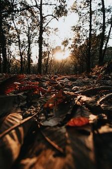 Herfst doorbladert op het bos