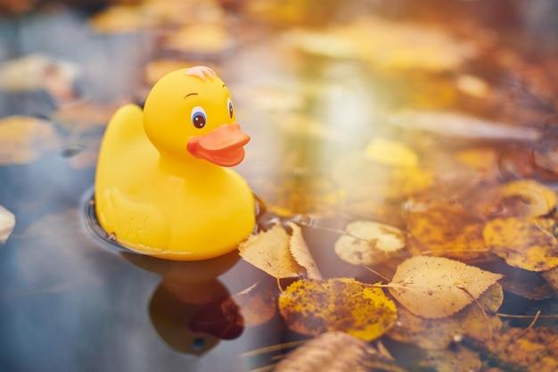 Herfst eend speelgoed in plas met bladeren. herfst symbool van verandering van seizoenen.