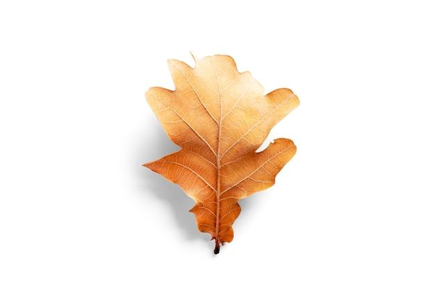 Herfst eiken boom blad geïsoleerd op een witte achtergrond. hoge kwaliteit foto
