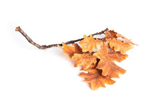 Herfst eiken boom bladeren geïsoleerd op een witte achtergrond. hoge kwaliteit foto