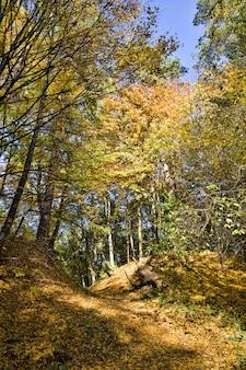 Herfst eikenbladeren op bomen, de specifieke kenmerken van de herfst, kleurrijke natuur en verkleuring naar geel en andere van groen gebladerte