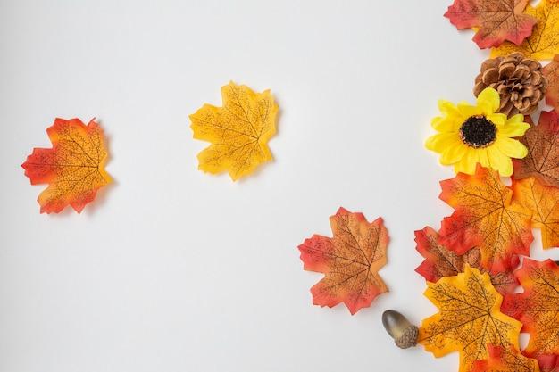 Herfst elementen zoals bladeren, eikels en dennenappels op witte achtergrond