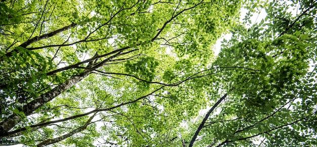 Herfst esdoorn blad aard vers