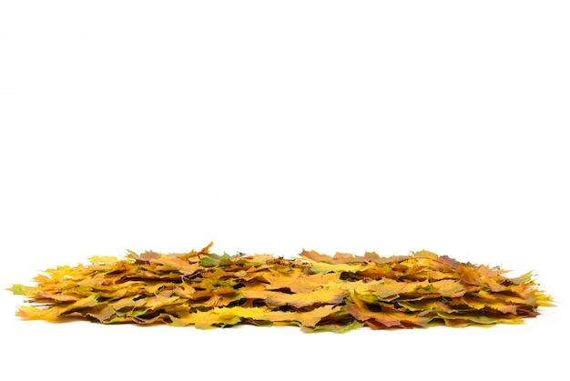 Herfst esdoorn bladeren geïsoleerd op een wit