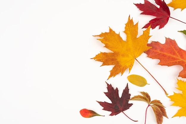 Herfst esdoorn bladeren geïsoleerd op een witte achtergrond, met kopie ruimte voor tekst. herfstconcept voor ontwerp