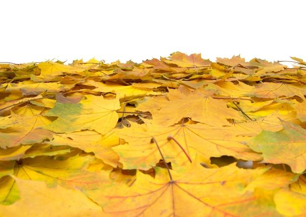 Herfst esdoorn bladeren geïsoleerd op een witte