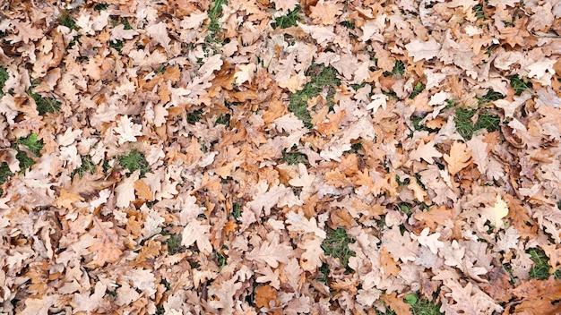 Herfst esdoorn en eikenbladeren op de grond. herfst esdoorn bladeren van bovenaf. gele bladeren achtergrond. gouden herfst esdoorn bladeren bekijken.