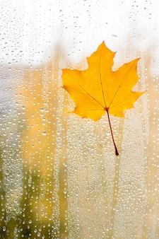 Herfst esdoornblad op glas met water druppels.