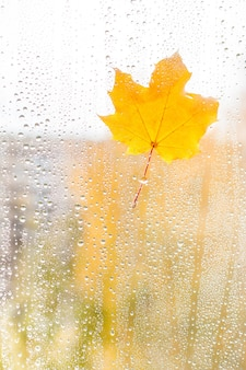 Herfst esdoornblad op glas met waterdruppels
