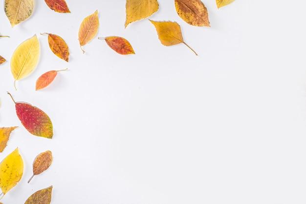 Herfst frame samenstelling, met kleurrijke rode gele herfstbladeren op witte achtergrond. thanksgiving vakantie wenskaart concept. flatlay, bovenaanzicht, kopieer ruimte