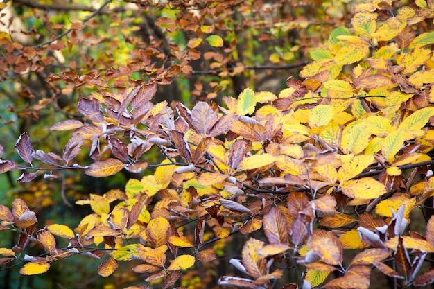 Herfst gebladerte achtergrond, gele bladeren