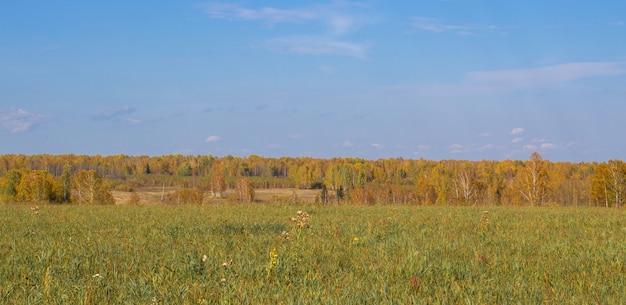 Herfst geel bos en veld. blauwe hemel met wolken boven het bos. de schoonheid van de natuur in de herfst.